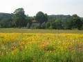 wild-flower-field